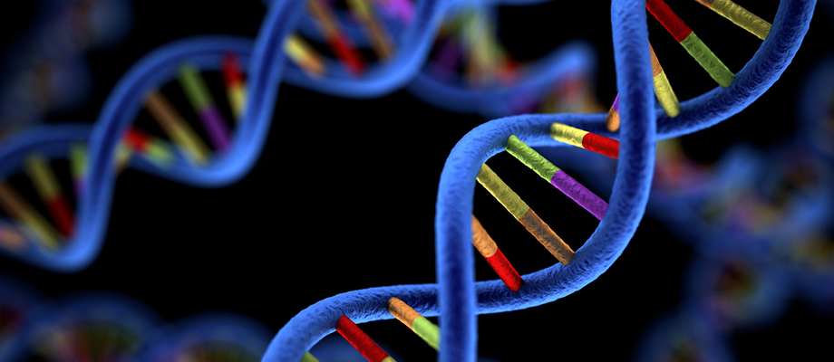 DNA genetic helix genome large
