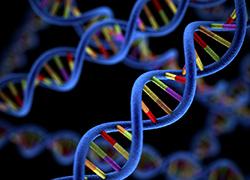 DNA genetic helix genome